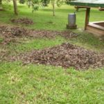 Leaves: the key source for timely soil production
